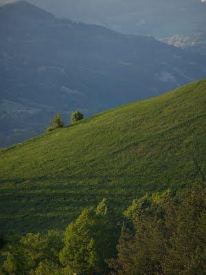 Rocca San Casciano: verdi primaverili
