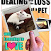 Dealing with the Loss of a Pet and Learning to Love a New One - Free Kindle Non-Fiction
