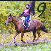 http://calendrierdelaventequestre.blogspot.com/2015/12/la-preparation-mentale-du-cavalier-endurance.html