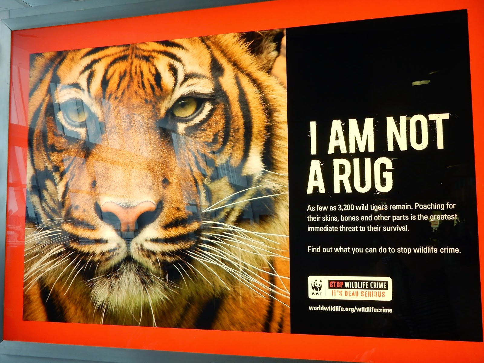 Save Tiger Images Save The Tigers