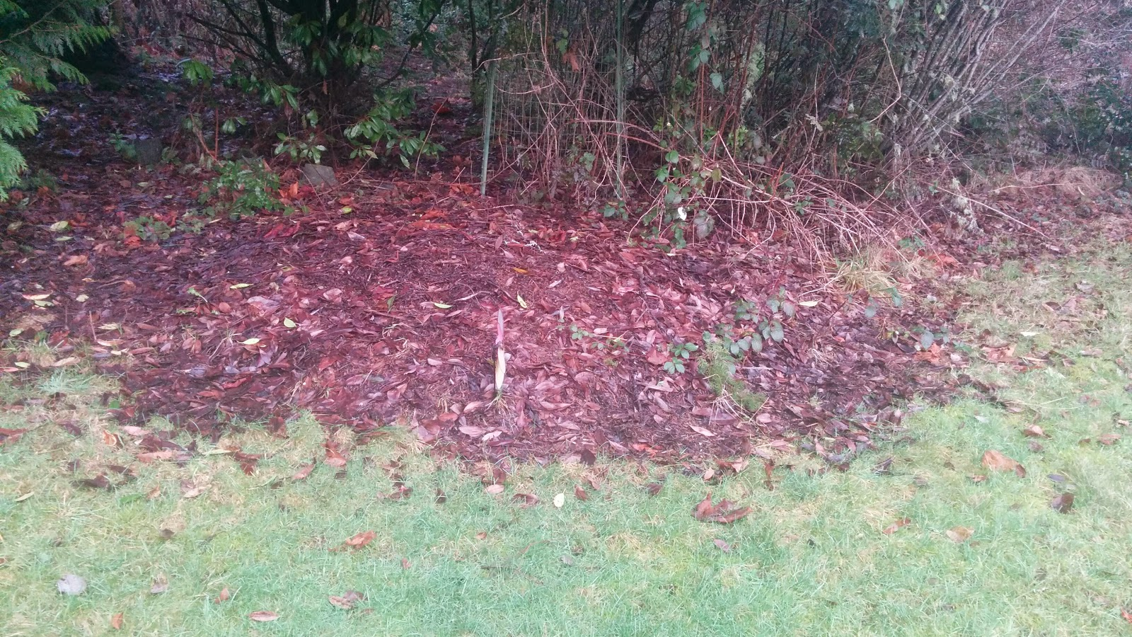 A raked up leaf pile that is largely composted.