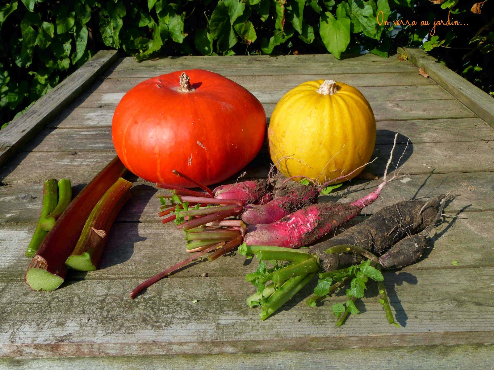 On verra au jardin cueillette du jour - Cuisiner le radis noir cru ...