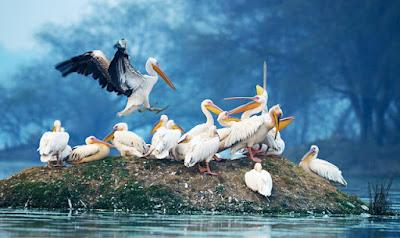 Homeland of Birds in Bharatpur