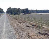 Cerca de 200 nuevos árboles junto a la vía verde