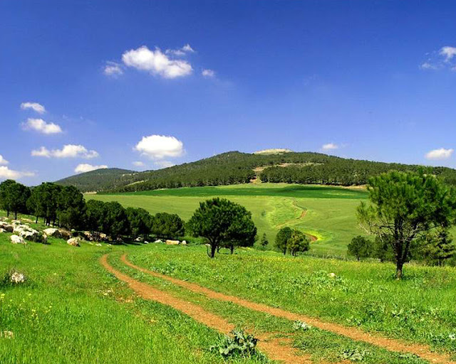 Green Israel Most Beautiful Places In The World Download Free Wallpapers