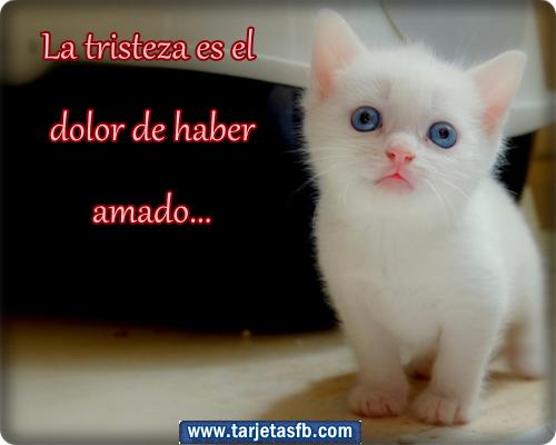 Gatos tristes con frases - Imagui