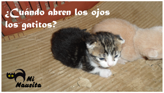 cuando-abren-ojos-gatitos