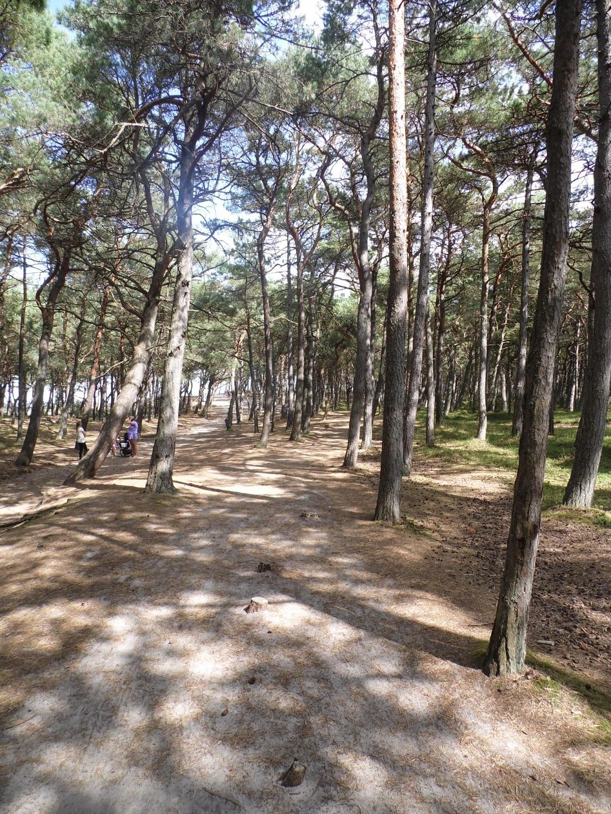 Droga w kierunku plaży przez las w Ostrowie.