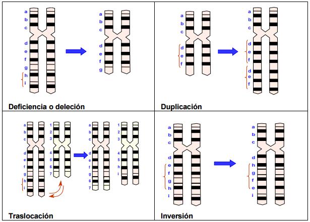 Mutaciones+cromos%C3%B3micas+estructurales.png