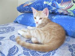 Sam,nato il 30/04/2012