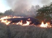 Incendio alla Riserva Naturale del Torrente Orba