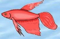 Betta Fish Care Siamese Fighting Panduan Ternak dan Rawatan Ikan Pelaga