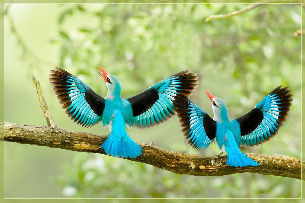 Wallpaper woodland birds spring robin songs japanese bird picture