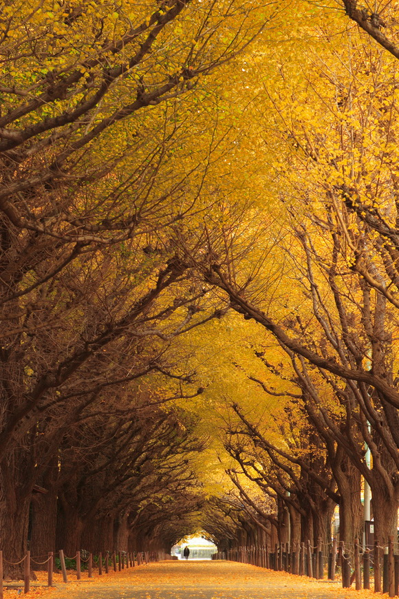 10 Famous Tree Tunnels