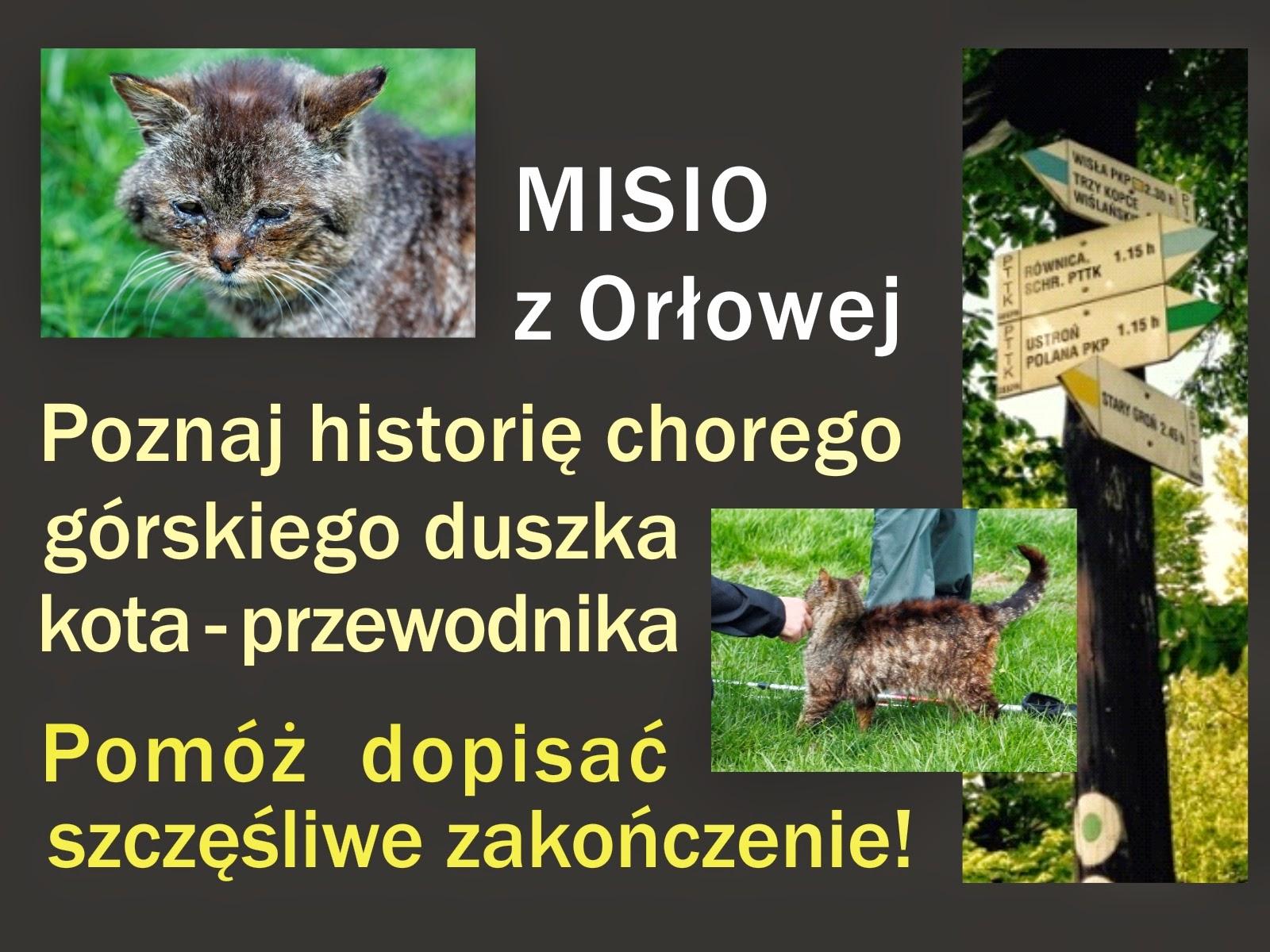 Misio Orłowk szuka domu