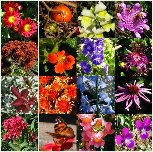 Flower garden collage
