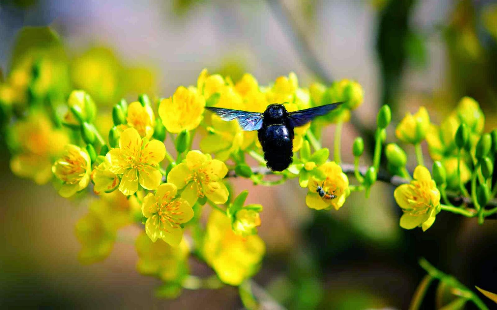 bộ sưu tập hoa mai tuyệt đẹp