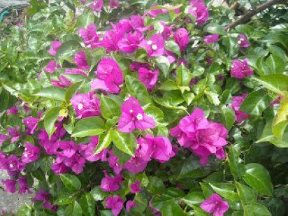Jardines del teide remedios caseros para tus plantas for Como evitar que salga hierba en el jardin
