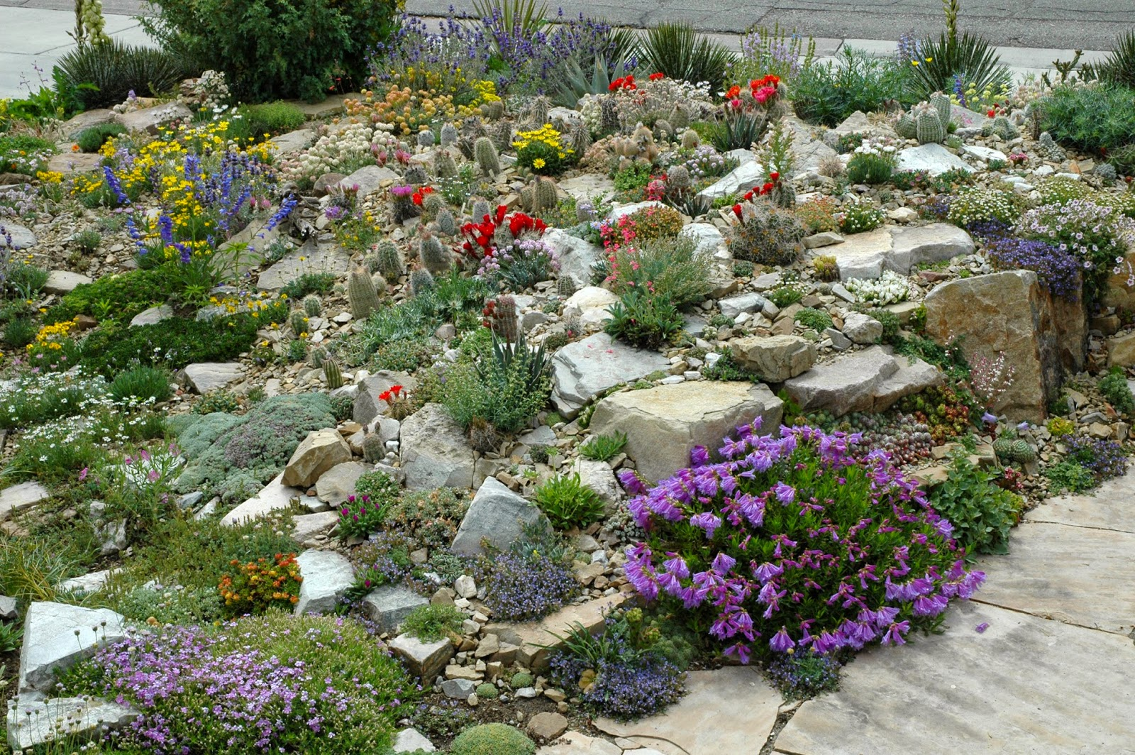 Design Pictures Of Rock Gardens paintbrush gardens llc crevice gardens