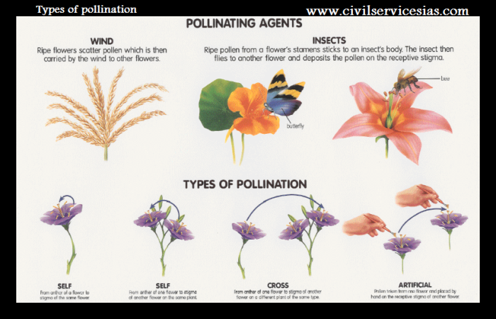 types of pollination,pollination