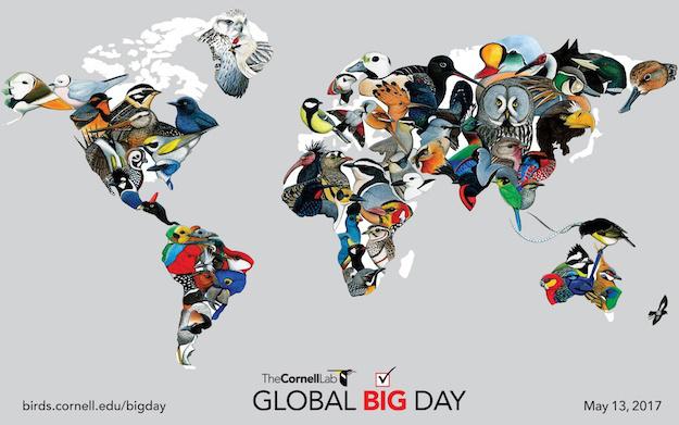 Global Big Day Brasil 2017