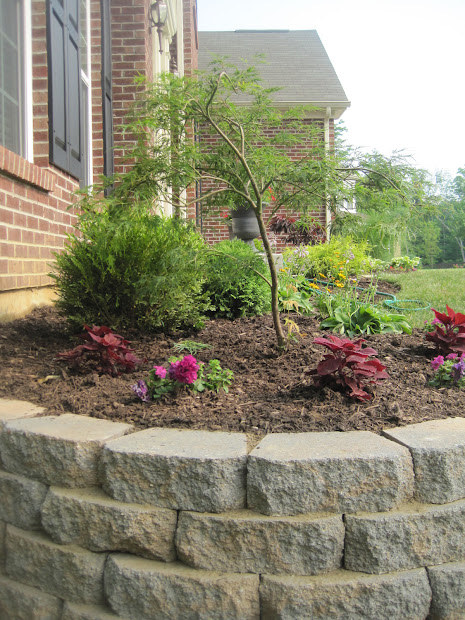 designed dwell landscaping