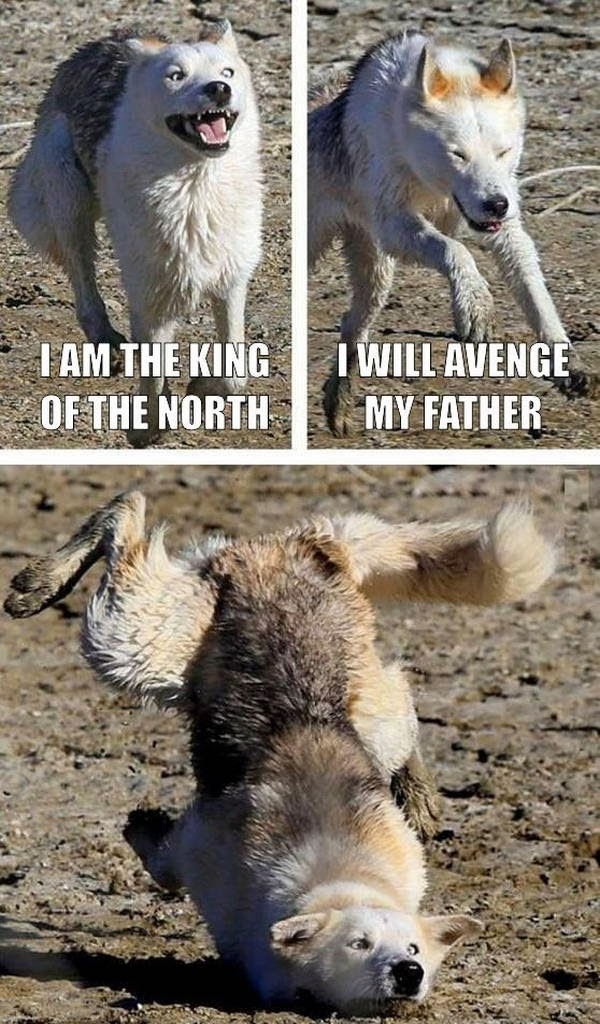 30 Funny animal captions - part 21 (30 pics), captioned animal pictures, dog meme moon moon
