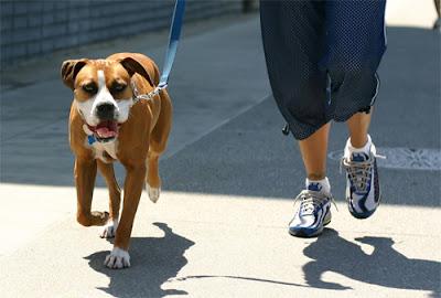 Dắt chó đi dạo