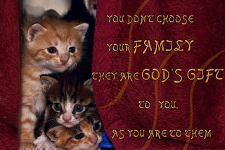 Funny cat sayings you don't chose your family
