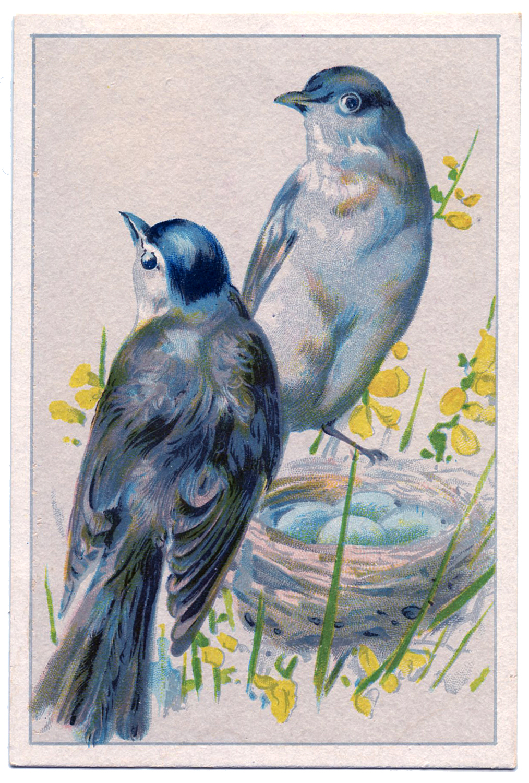 http://1.bp.blogspot.com/-AVpgjUlYAMs/T7L6e9tE3mI/AAAAAAAAR5Q/3RTLn8wLQDA/s1600/Birds-BlueEggs-vintageimage-Graphics-Fairy.jpg