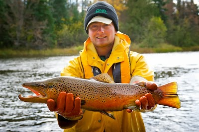 Showcasing the Michigan DNR: Looking for the right strain of brown trout