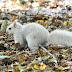 Λευκός σκίουρος; Ένα σπάνιο φαινόμενο [Photos]