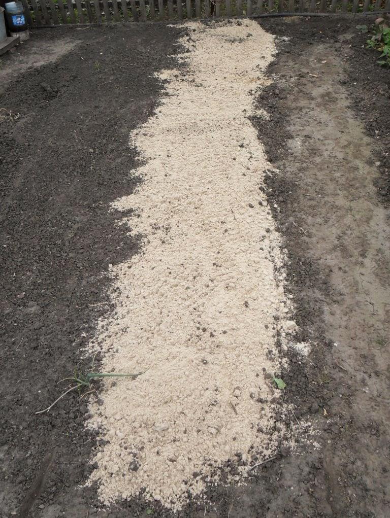 Внесение песочка под чеснок