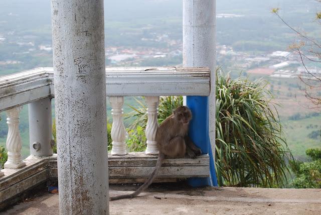 Обезьяна-драчун на вершине холма в Tiger Cave Temple, Krabi, Thailand.