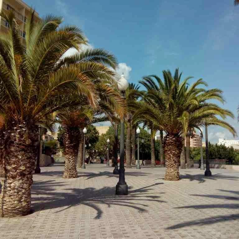 paseo de las palmeras tarragona