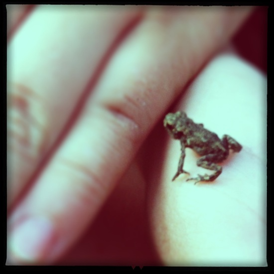 A tiny frog