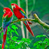 Colorful Love Birds photos free download