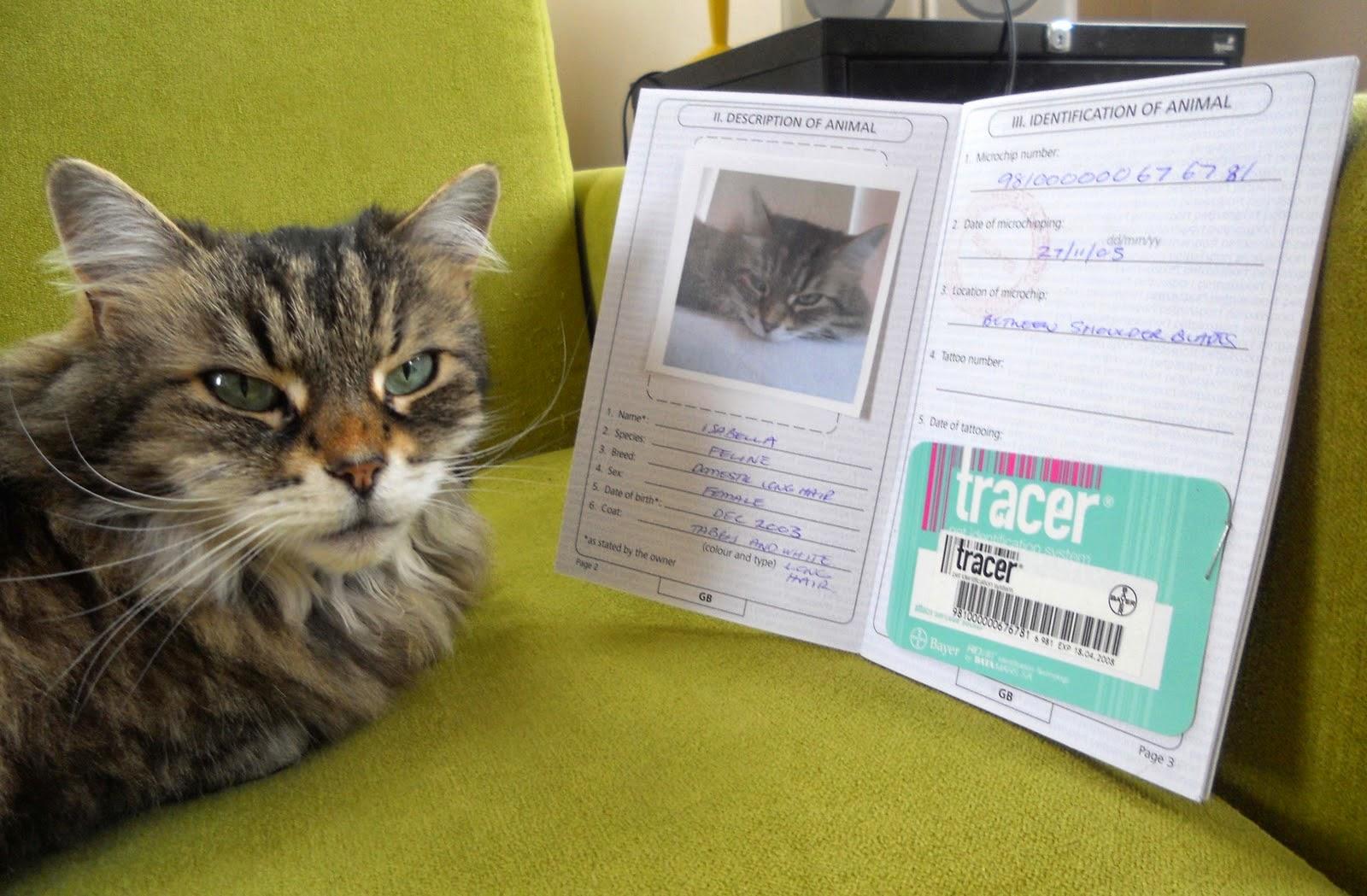 cat+passport+3.jpg
