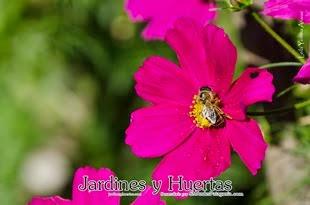 Primavera en Jardines y Huertas
