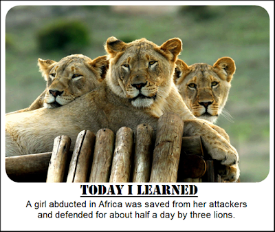 A girl abducted in Africa was saved from her attackers by 3 lions