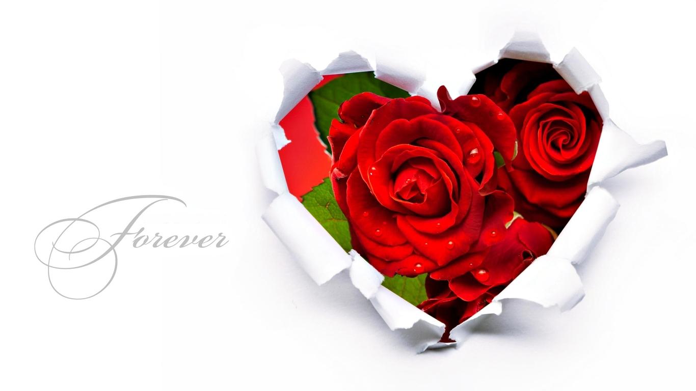 http://1.bp.blogspot.com/-AXf4iDbwmEg/UDIrJEH39WI/AAAAAAAABM4/mCBCJwaOtvg/s1600/Love%2BForever%2BHD%2BWallpaper.jpg