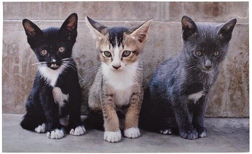 Deurmat katten