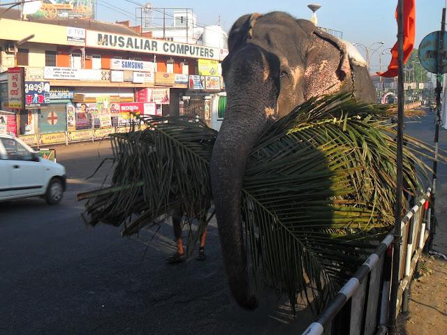 слон на улице Индии