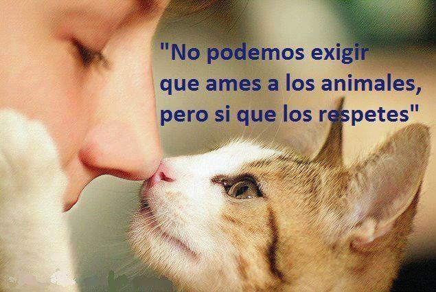 Consejo sobre animales