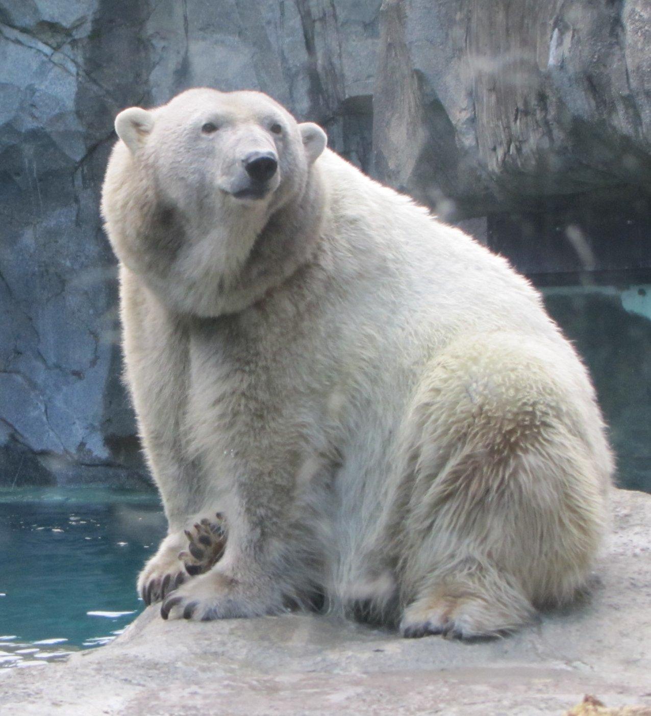 My Polar Bear Friends And Friends Of Polar Bears: Meeting
