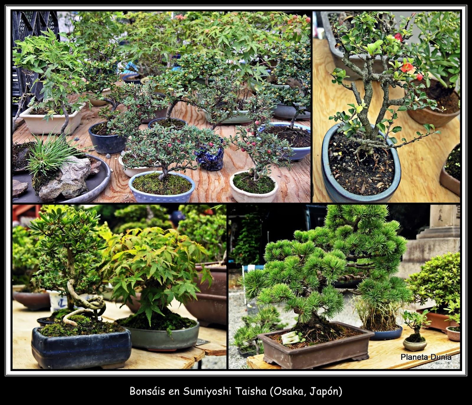 Planeta dunia rboles de un jard n japon s - Como hacer un jardin japones ...