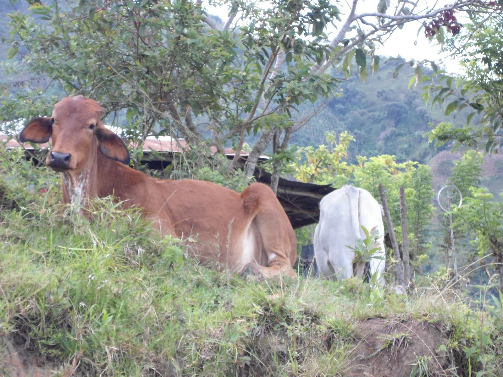 Sabanalarga antioquia colombia usos del suelo for 4 usos del suelo en colombia