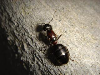 seattle pest control, kitsap county pest control, bremerton pest control