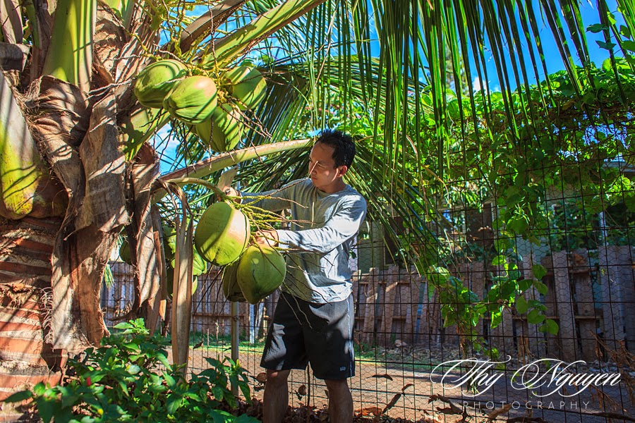 My very first time cutting down coconut. I mean when am I ever going to be eye level with a coconut tree?