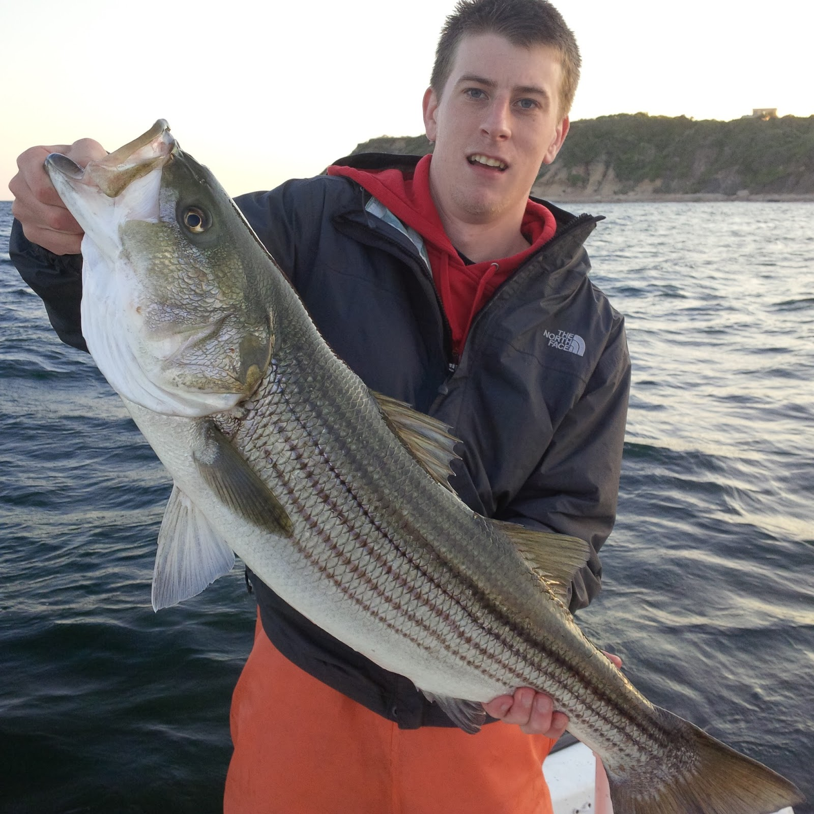 Rhode island striped bass big difference between shore for Bass fishing from shore